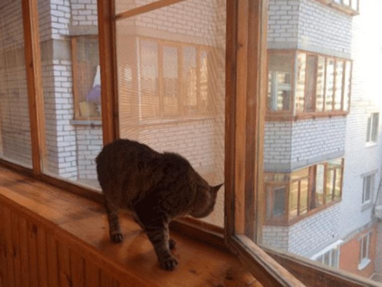Сетка на окно для кошек своими руками 62